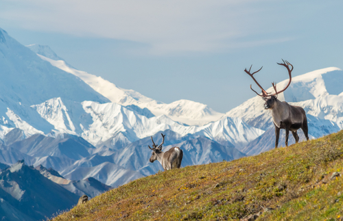 Alaska Opens Up: Visiting No Longer Requires a Negative Covid-19 Test | Frommer's