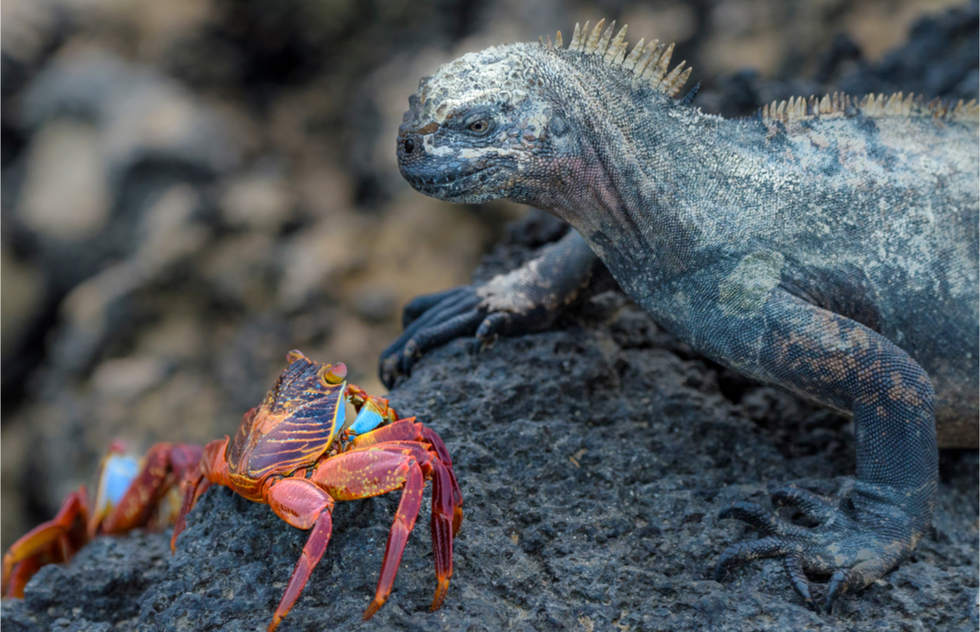 Where to go in the Galapagos Islands: San Cristóbal Island (Chatham)