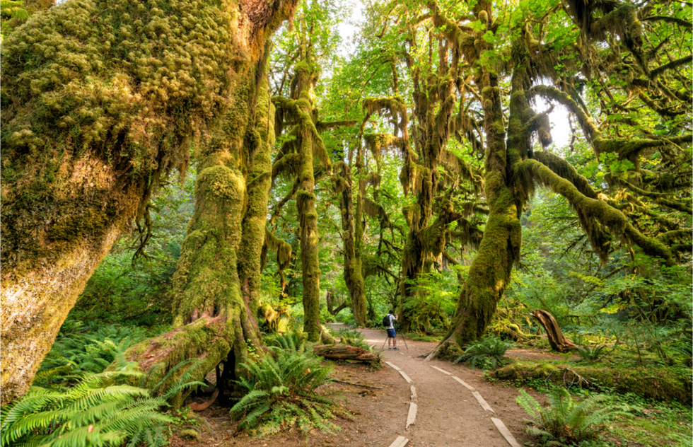 Which National Parks to see in June, July, August, and September: Olympic National Park