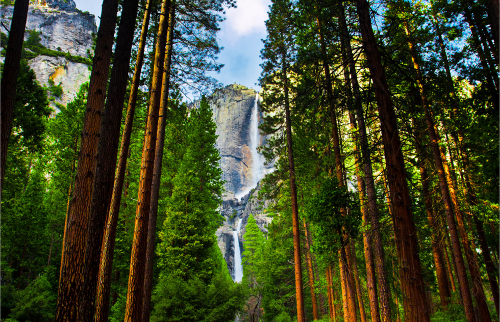 A waterfall seen through a strand of sequoias at Yosemite National Park.