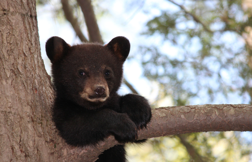 Safety Tips for Hiking and Camping in Bear Country | Frommer's