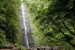 Adventurers re-energize themselves aside the soothing and spectacular Manoa Falls.