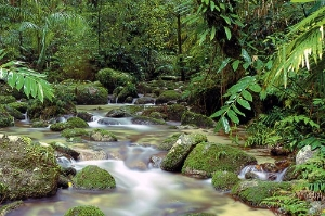 The Daintree Rainforest in Queensland, Australia.