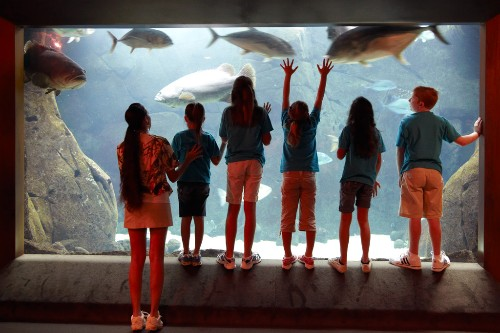 Kids with the Camp Penguin program at Hilton Hawaiian Village Beach Resort & Spa visit the aquarium.