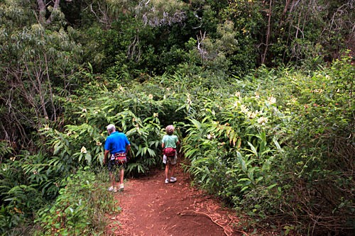 The 3.5 mile round-trip Waimea Canyon Trail hike takes 2 to 3 hours and brings you to the breathtaking Waipoo Falls.