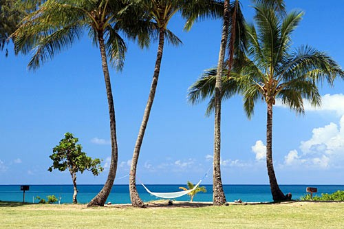 Swim, snorkel, have a picnic, or just relax at Tunnels Beach & Haena Beach Park.