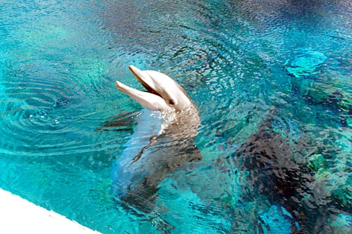 Secret Garden and Dolphin Habitat at the Mirage in Las Vegas, Nevada