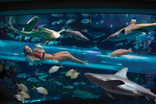 Artist's rendering of the Golden Nugget's new waterslide within a shark tank. Photo: Golden Nugget Images