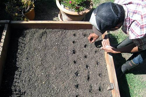 Jason Boarde, the founder of the Pedal Patch Community in Los Angeles, plants seeds.