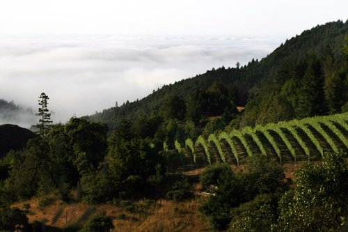 Camp Meeting Ridge Vineyard at 1,400 feet elevation, at Flowers Vineyard & Winery. Photo: David Keatley