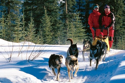 Dog sledding is one of the many outdoor activities available in Banff National Park. Courtesy Fairmont Hotels and Resorts