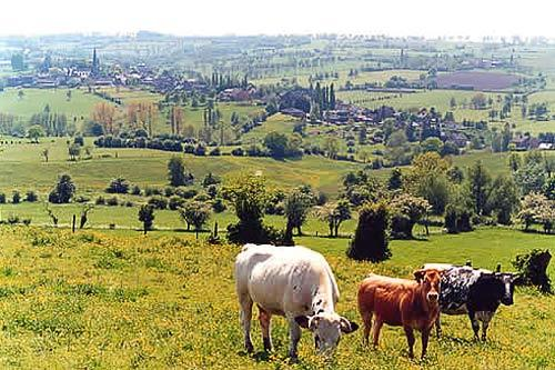 The bucolic landscape in Herve, a region south of Brussels.