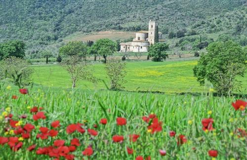 Poppy fields in Abbazia di Sant'Angelo