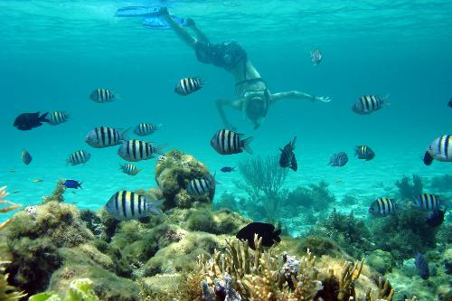 The bahamas underwater top dive sites for Fishing nassau bahamas