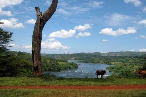 A peaceful scene with the Nile in the background in Jinja, Uganda.