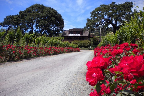500 red roses line the entrance to the Yorkville Cellars tasting room, which has vineyard views from all windows and decks. Photo courtesy Yorkville Cellars