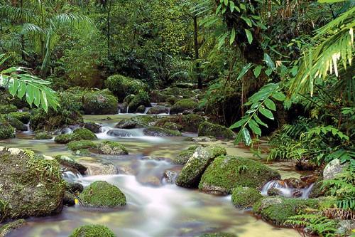 Rainforest Resorts For Honeymooners And Romantics