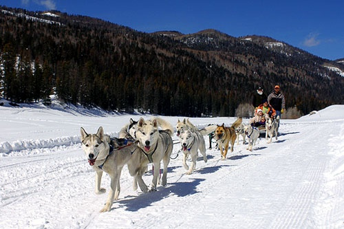 A team of dogs leads a sled in Durango, Colorado.