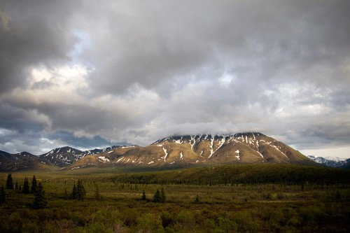 The foothills of the Alaska range in Denali National Park.
