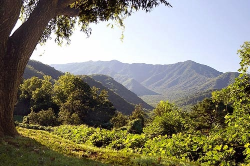 The summer greenery of the Smoky Mountain. Courtesy Gatlinburg Department of Tourism