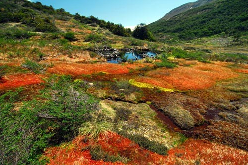 Pond and peatland in Navarino Island, the latest inhabited island before Antarctica.
