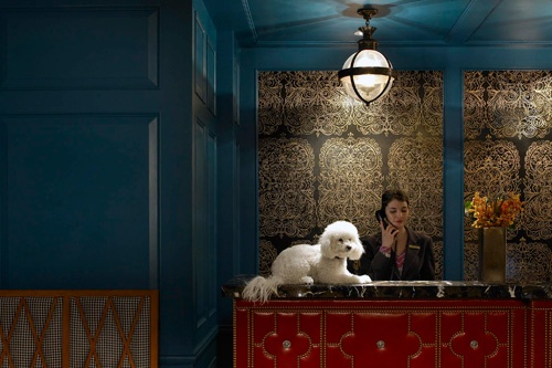 Charlie, the Director of Pet Relations at Kimpton's Hotel Monaco Alexandria, Virginia. Photo: David Phelps