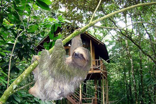A sloth near Tree Houses Hotel in La Fortuna, Costa Rica. Courtesy Tree Houses Hotel