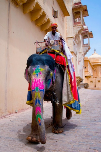 One of the attractions in Jaipur is the elephant ride from the edge of the city to the Amber Palace.